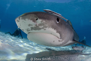 Smiley checking out my dome port by Stew Smith 